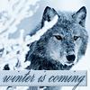 icewolf: snowy wolf (winter is coming)