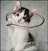 drglam: Cloned kitten, in a beaker (Default)