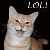 magdalyna: (cat lol)