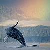 cosmic_ocean: (rainbow whale)