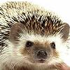 eroded_earth: ([Hedgehog] Great)