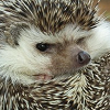 eroded_earth: ([Hedgehog] Pout)