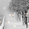 somethingnew: (snow dogs)