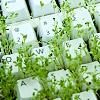 roundballnz: (green keyboard)