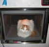 aquaeri: A cat sitting inside an oven with its door removed (baking)