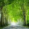 contrarywise: Glowing green trees along a road (smiling jack)
