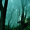 marusarel: a shot of ethereal woods, at night, in blues and greens (Forests: Arda (twilight))