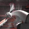 yearofpeacock: (pic#4023049)