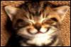 musingaloud: (catgrin)