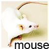 tinmouse: Photo of a white mouse, with the word 'mouse' in black letters beneath it. (Default)