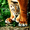 tiger_eyes: (keep them safe)