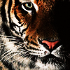 tiger_eyes: (Default)