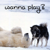 indeliblesasha: A sled dog playing with a polar bear (real picture). Text: wanna play? (Misc - Wanna play?)
