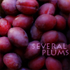pensnest: purple plums (plums number one)