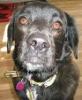 serenissima: close-up of dog's face (Mungo closeup)