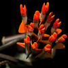 pinepig: arrows with bright orange nocks & orange and black fletching (Arrows & nocks by red_trillium)