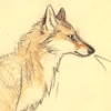 fox_witch: GPOY ()
