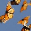 gardenparty: (Butterflies)