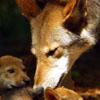 professorwolf: (wolf-pups)