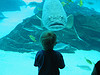 serenissima: Huge fish and small boy stare at each other (wonder)