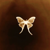 169: a white butterfly on a dark brown background, glowing/backlit (butterfly)