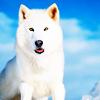 anissu: ([Wolves] White Wolf)