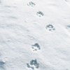 anissu: ([Wolves] Paw Prints)