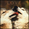 coyote: (canine love)