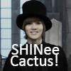 alixmason: (SHINee)