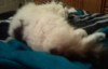 cynthia1960: passed out cat (catnip)