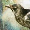 rising: bird (the cadre: raven illustration)