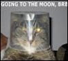 """starfish: cat with plastic bowl on head, captioned """"going to the moon, brb"""" (Mooncat)"""