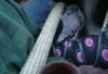 june_faramore: A test shot that turned into a running joke. A bamboo flute in its case sticing out between my legs while sitting. (bamboo, default, dildo, flute, heroes, joke, myspace)