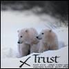 marilla_pm67: (* Bear Trust)
