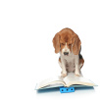 bluemeridian: (NF :: Beagle :: Reading)
