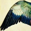 highlyeccentric: A green wing (wing)