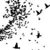giddygeek: birds flying (brain voice)