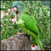 walking_forward: and Imma parrot (How to communicate)