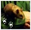 quarryquest: (hamster)