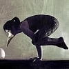 rydra_wong: a woman wearing a bird mask balances on her arms in bakasana (yoga -- crow pose)