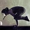 rydra_wong: a woman wearing a bird mask balances on her arms in bakasana (yoga -- crow pose)
