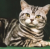 jeffthoth: (cat)