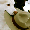 skieswideopen: Diefenbaker holding Fraser's hat (Due South: Diefenbaker)