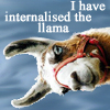 china_shop: I have internalised the llama (llama internalised)
