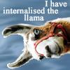 china_shop: I have internalised the llama (llama internalised)