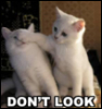 china_shop: Lolcats kittens saying Don't Look! (Don't Look)