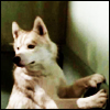 china_shop: Dief with his paws against the wall (Dief against wall)