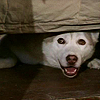 china_shop: Dief hiding under the bed (Dief hiding)