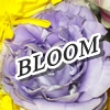 "jumpuphigh: Lavender rose with the word ""BLOOM"" across it. (Bloom)"