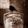 darchildre: sepia toned, a crow perched on a gravestone (gravestone)